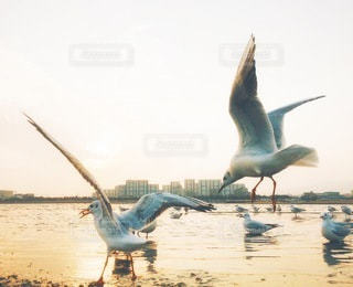 海の写真・画像素材[5691]