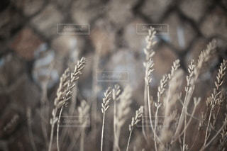 自然の写真・画像素材[5685]