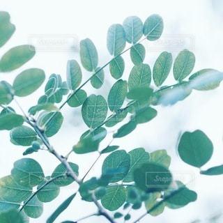 自然の写真・画像素材[5683]