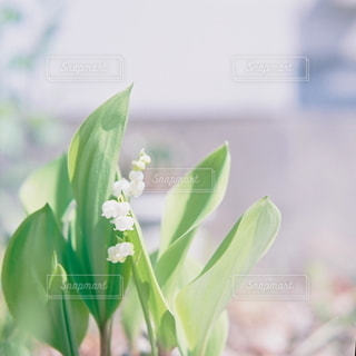 自然の写真・画像素材[5681]