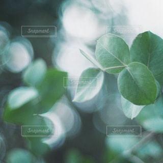自然の写真・画像素材[5677]