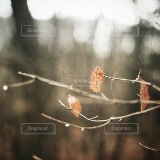 自然の写真・画像素材[5676]