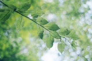 自然の写真・画像素材[5673]
