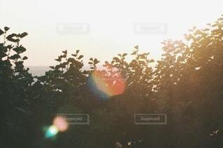 自然の写真・画像素材[5671]