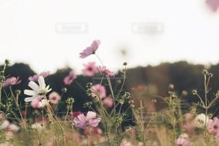自然の写真・画像素材[5665]