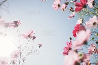 自然の写真・画像素材[5669]