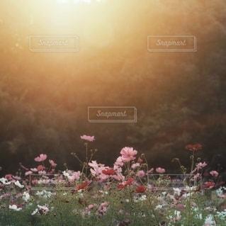 自然の写真・画像素材[5666]
