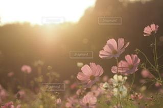 自然の写真・画像素材[5663]