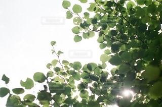 自然の写真・画像素材[5656]