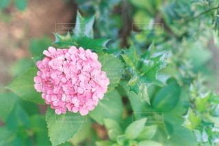 自然の写真・画像素材[5655]
