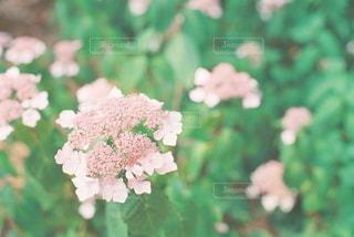 自然の写真・画像素材[5654]