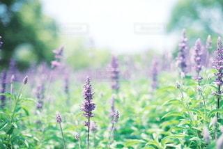 自然の写真・画像素材[5652]