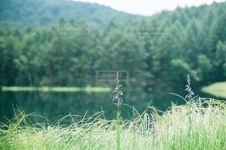自然の写真・画像素材[5646]