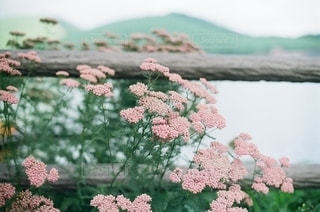 自然の写真・画像素材[5642]