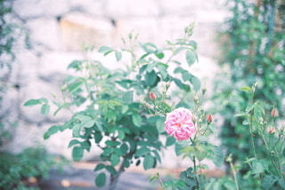 自然の写真・画像素材[5636]