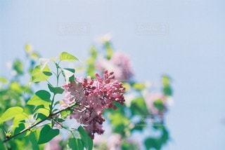 自然の写真・画像素材[5634]
