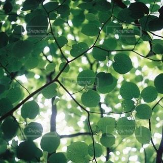 自然の写真・画像素材[5632]