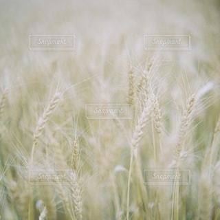 自然の写真・画像素材[5631]