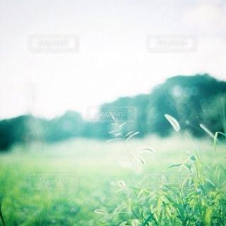 緑の写真・画像素材[5630]