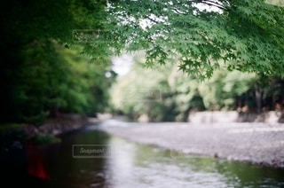 自然の写真・画像素材[5628]