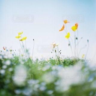 自然の写真・画像素材[5624]