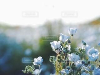 自然の写真・画像素材[5621]