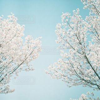 自然の写真・画像素材[5618]