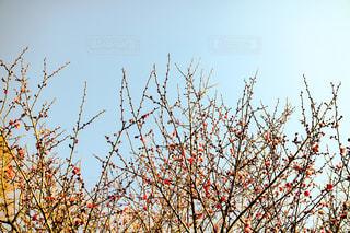 No.404097 春