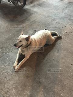 犬の写真・画像素材[290265]