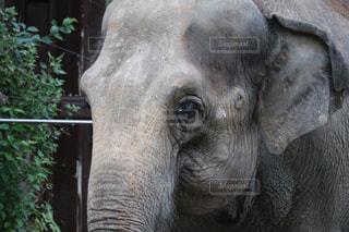 動物 - No.262059
