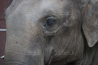 動物の写真・画像素材[262060]