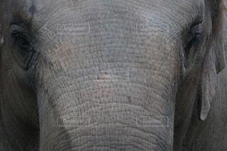 Tシャツにプリントしたい象の写真・画像素材[262062]