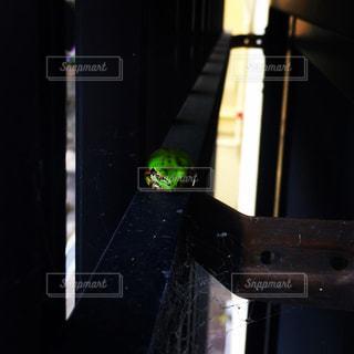 カエルの写真・画像素材[262109]