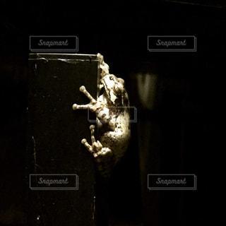 カエルの写真・画像素材[262111]