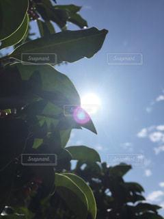 木の写真・画像素材[262369]