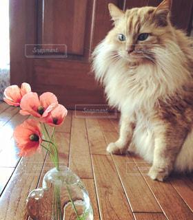 お花見と猫の写真・画像素材[3163140]
