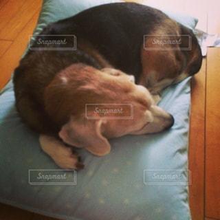 犬の写真・画像素材[262490]