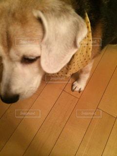 犬の写真・画像素材[262491]