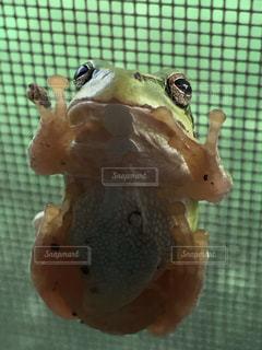 自然の写真・画像素材[262501]