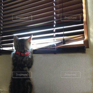 猫が好きの写真・画像素材[262753]