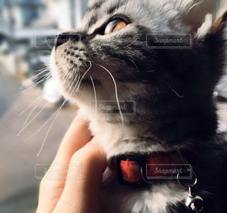 猫 - No.307191
