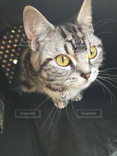 猫 - No.371036