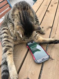 猫の写真・画像素材[262790]