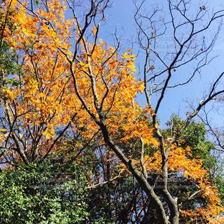 秋の写真・画像素材[272455]