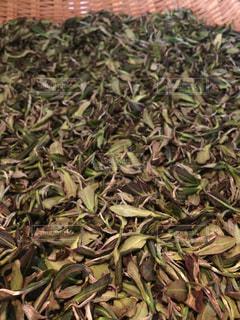 お茶の写真・画像素材[264033]
