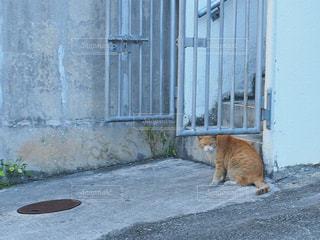 猫の写真・画像素材[285319]