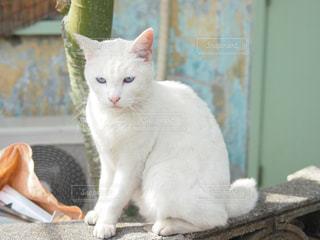 猫の写真・画像素材[285320]
