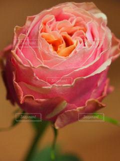 花の写真・画像素材[311952]