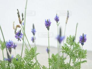 花の写真・画像素材[311970]