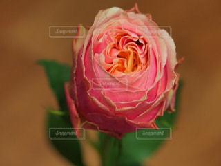 花の写真・画像素材[311971]